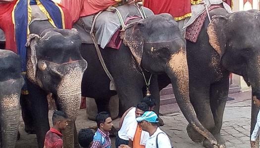 Un viaggio in India: da Ranakpur a Varanasi – 2di2