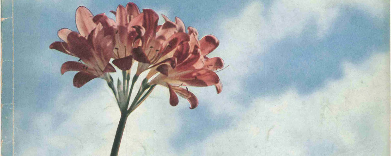 Copertina della rivista trimestrale Bemberg, design di Licalbe Steiner
